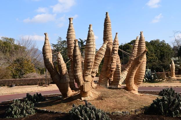 植物園の冬景色