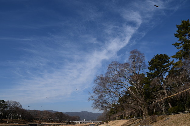 冬空の賀茂川