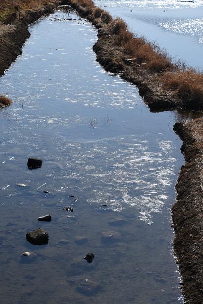 薄く氷の張った賀茂川