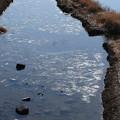 Photos: 薄く氷の張った賀茂川