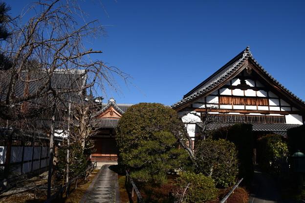 冬の天寧寺