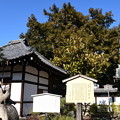 Photos: 天寧寺の榧(カヤ)