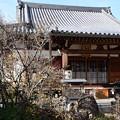 Photos: 大蓮寺の素心蝋梅