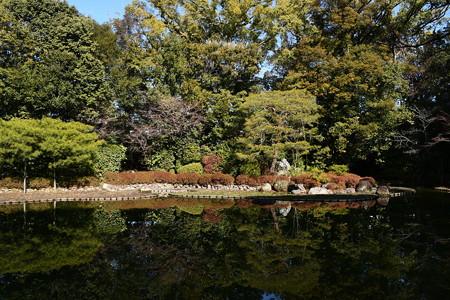 冬の白虎池