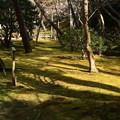 Photos: 冬の苔