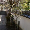 Photos: 浄土院の素心蝋梅(ソシンロウバイ)