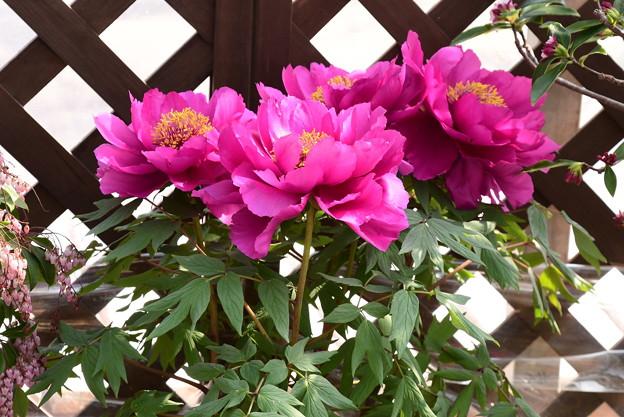 紫天門(シテンモン)