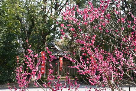 白雲神社向かいの紅梅