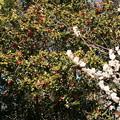 Photos: 白梅と薮椿咲く宗像神社