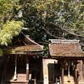 Photos: 宗像神社の薮椿(ヤブツバキ)