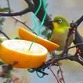 小鳥 002 (310x232)