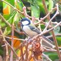 小鳥 006 (640x479)