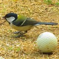 小鳥 009 (310x232)
