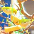 小鳥 063 (640x480)