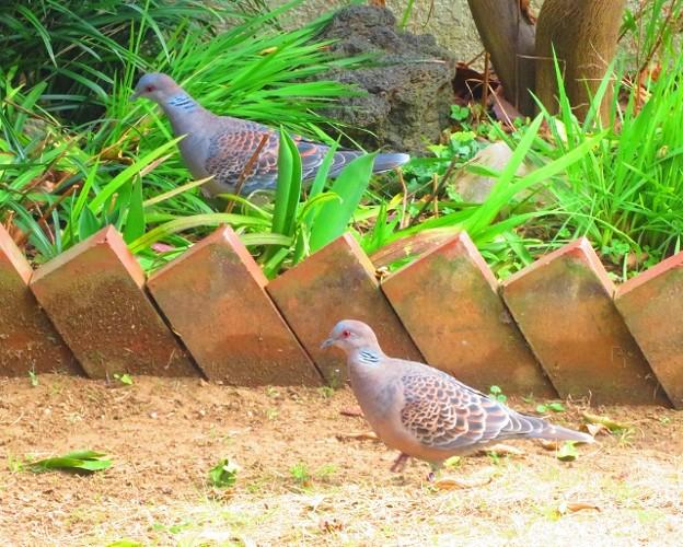 小鳥 050 (640x513)