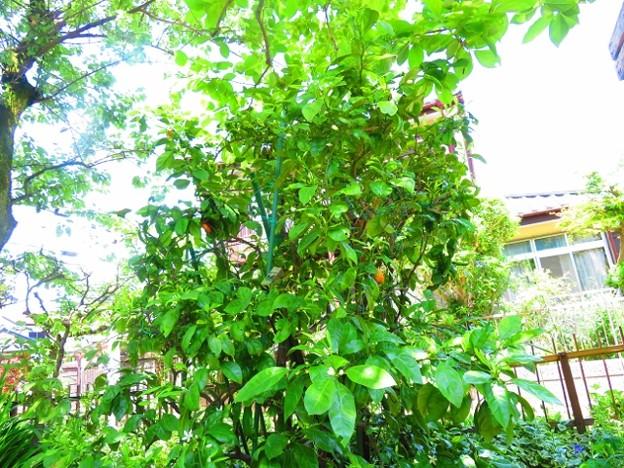 果樹の花 018 (640x480)