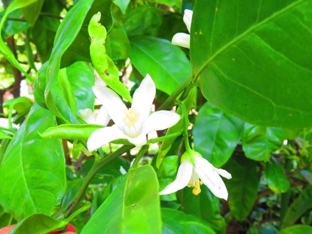 果樹の花 017 (640x479)