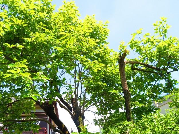 果樹の花 020 (640x479)