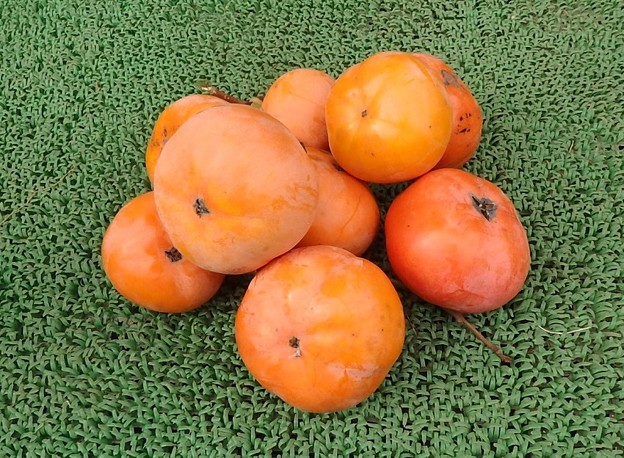 Photos: 富有柿