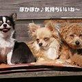 Photos: ぽかぽかだね