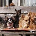 Photos: ちぃぼーこっち向いて!