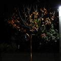 写真: 都会の晩秋