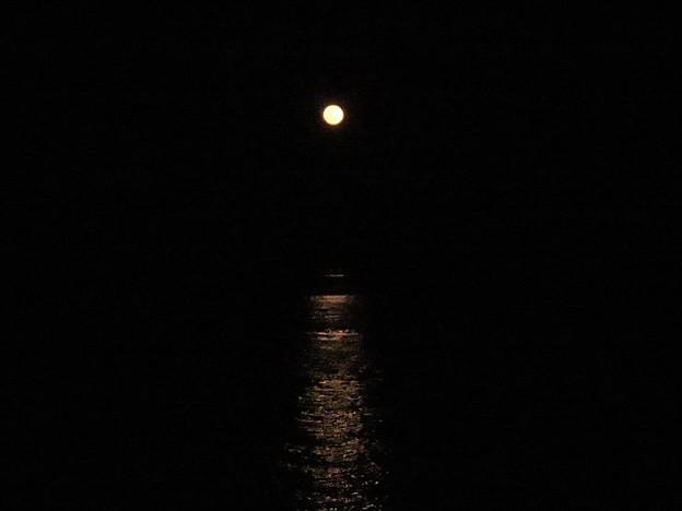 月光_4250