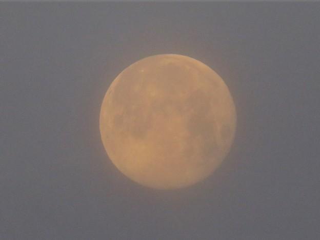 朝の月_4261