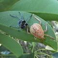 写真: カメムシ幼虫&??_9556