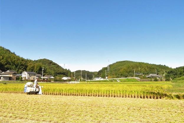写真: 稲刈り(実家)_2778