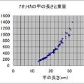 Photos: アオリイカ重量データ