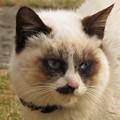 タヌキ猫(実家)_5182