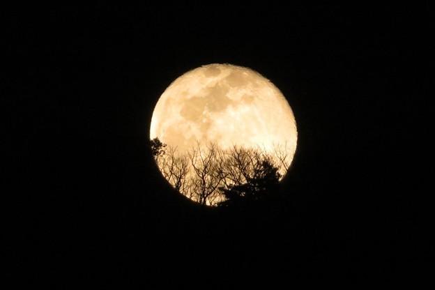 月&山の木々_6212