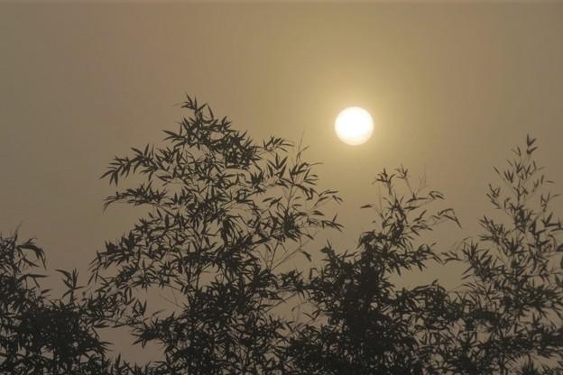 白い朝陽&竹_8311