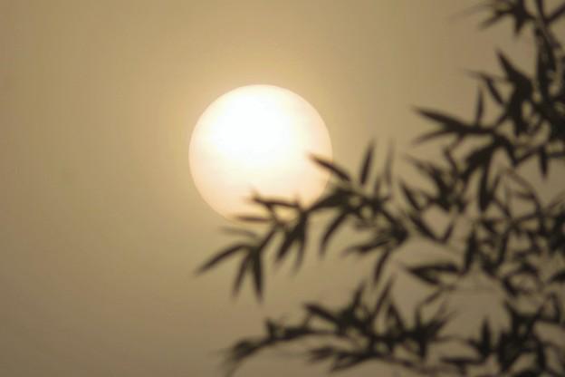 白い朝陽&竹_8307