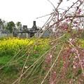 Photos: お墓参り_8359