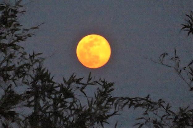夕満月_9593