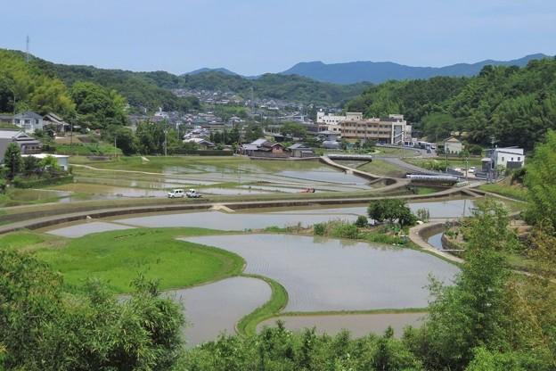 田園風景_2011