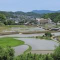 Photos: 田園風景_2011