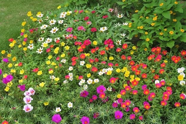 花壇の花達_4098