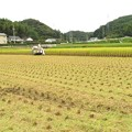 Photos: 稲刈り_5390