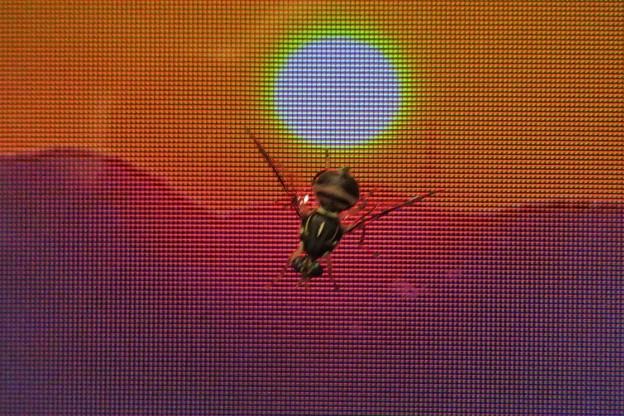 小さな蜂(モニター画面)_0031