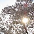 桜_2055
