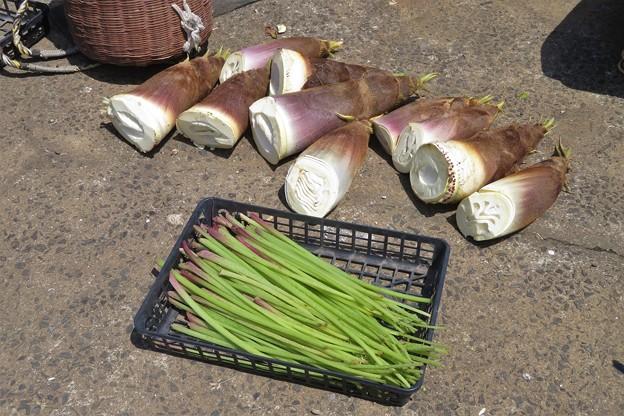 フキ&タケノコ収穫_2476