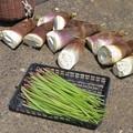 Photos: フキ&タケノコ収穫_2476