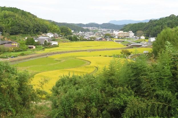 田園風景_7656