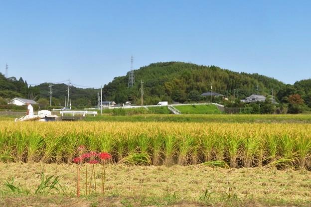 稲刈り_8070
