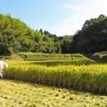Photos: 稲刈り_8252
