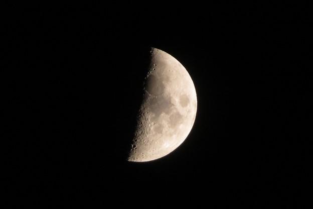 上弦の月_8719