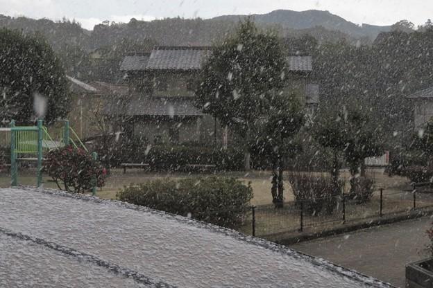 降雪_0484